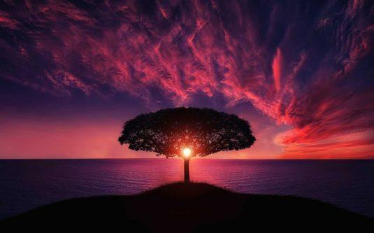 Moderkage, livets træ